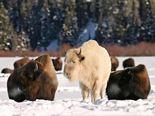 ¿Qué son los Arquetipos Animales?