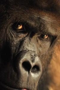 el mono-animales totémicos