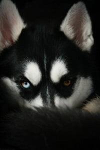 el perro-animales totémicos