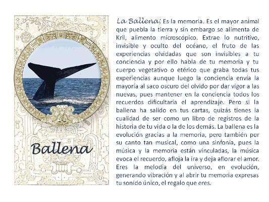 carta de la ballena