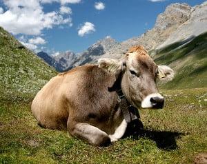 la vaca-animales totémicos