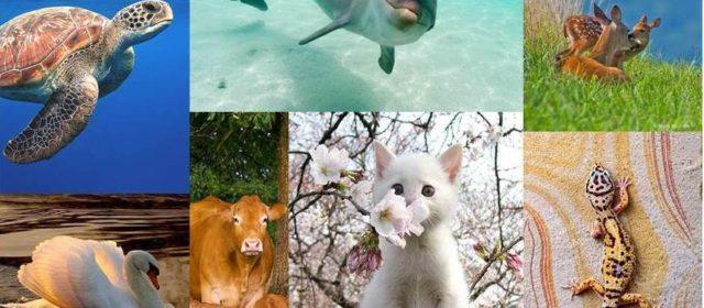 Descubre el mensaje de los 7 animales extraordinarios que te ayudarán a estar más centrado.