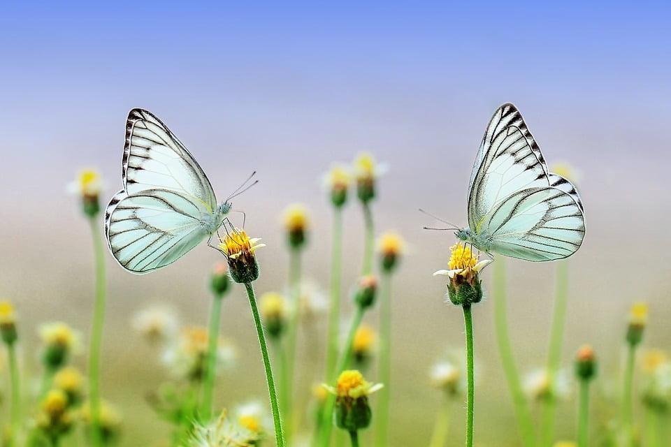 mariposas-trabajo-meditacion