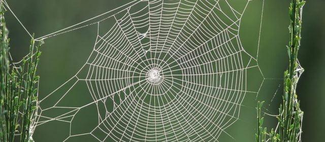 La Araña