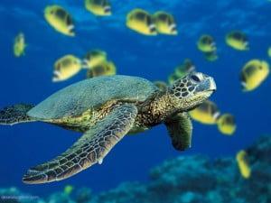 la tortuga-animales totémicos