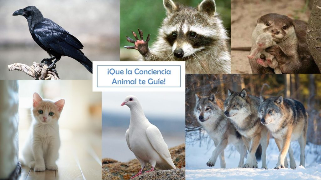 que la conciencia animal te guíe