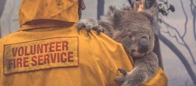Incendios en Australia: significado espiritual del Canguro y el Koala