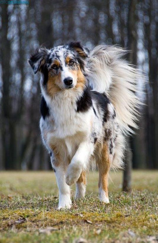 trabajo energético del perro en nuestras vidas