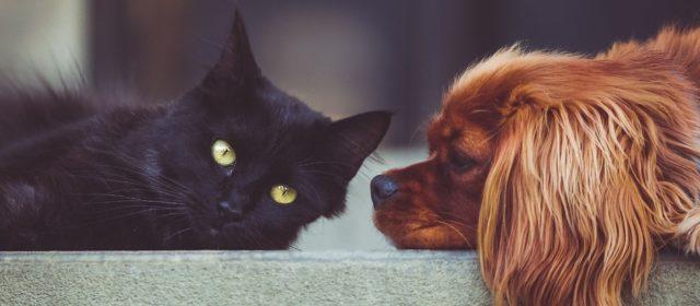 El trabajo energético de perros y gatos en nuestras vidas