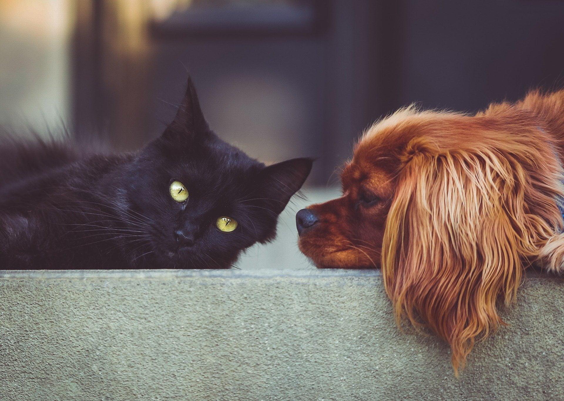 trabajo energético de perros y gatos en nuestras vidas