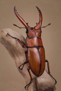 tótem escarabajo animal de poder